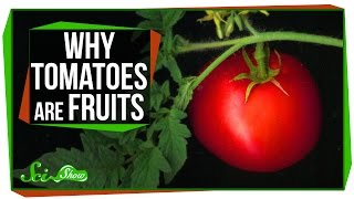 Why Tomatoes Are Fruits, and Strawberries Aren't Berries (SciShow)