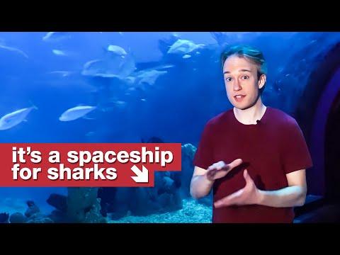 How Aquarium's Keep Sharks Alive