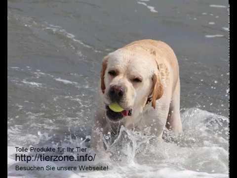 Hundenetz - für ein sicheres Zusammenleben mit dem Hund