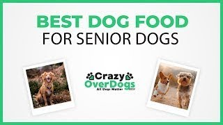 Best Dog Food For Senior Dogs in 2020