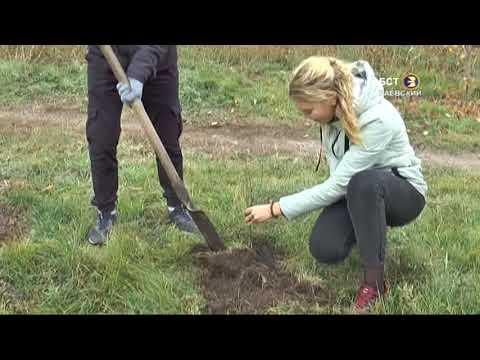 Учащиеся сажали деревца
