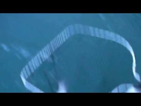 Attrezzature per elastico video da pesca