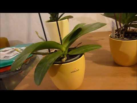 Orchideen - Update