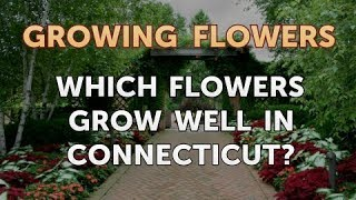 Which Flowers Grow Well in Connecticut?