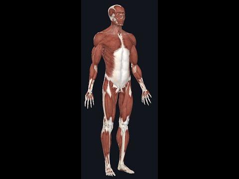 Dureri articulare la spate și gât.metoda de tratament