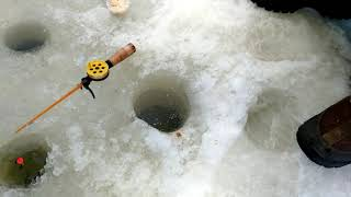 Рыбалка на карпа снасти зимняя