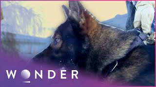 How Dogs Are Trained To Catch Criminals | K9 Mounties S1 EP4