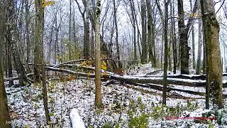 Молодые рыси по-разному встречают первый ливневый снег :) Парк животных Элиствере, Эстония