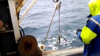 Chatham ISlands Crayfishing