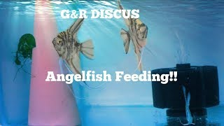Feeding All the Angels at G&R Discus!!!