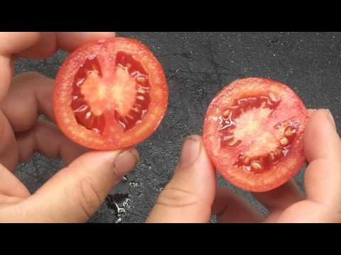 , title : 'Red Siberian Tomato: Early Tomato