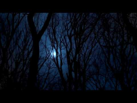 [10 Hours] Full Moon Forest Video & Audio Nightbirds [1080HD] SlowTV