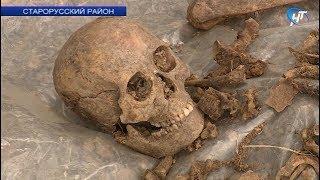 В Старой Руссе поисковики ведут масштабные работы на месте лагеря для военнопленных «Дулаг-150»