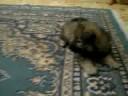 Da vermi a un cucciolo prima di uninoculazione