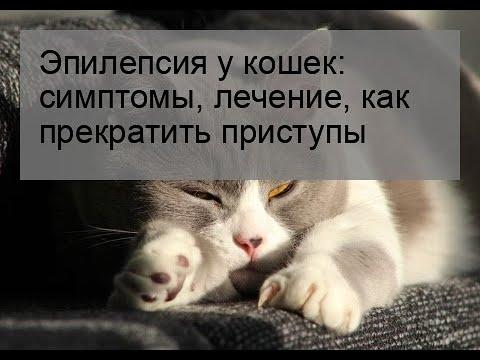 Эпилепсия у кошек: симптомы, лечение, как прекратить приступы