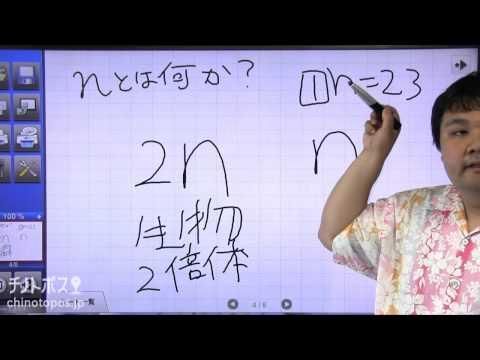 酒井翔太のどすこい生物 part1(染色体と核相)