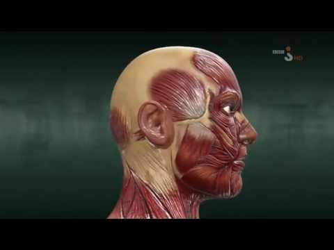 Ćwiczenia na wzmocnienie mięśni pleców w filmie dla dzieci