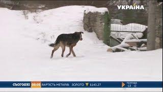 Мало не до смерті покусав свою власницю собака на Вінниччині