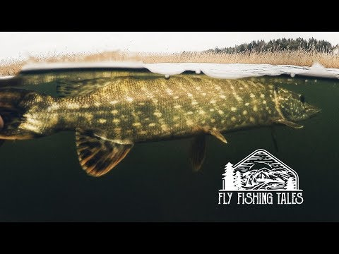 Fly Fishing Tales // Pike Land