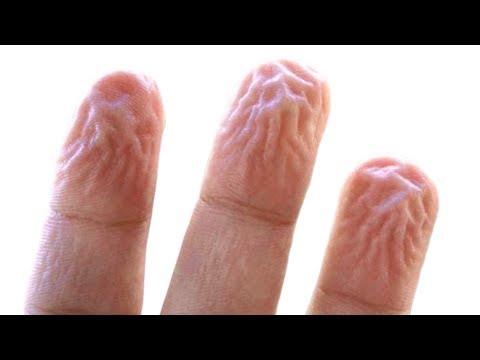 Przewód piersiowy