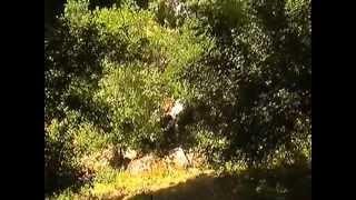 preview picture of video 'Nouvelle cascade à Sefrou'