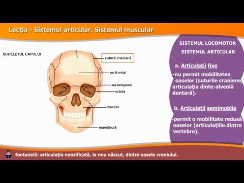 Viziune de tratament articular