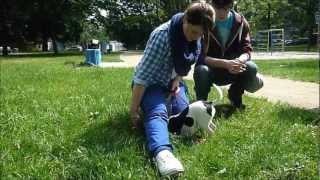 preview picture of video 'WaLu & Hunde-Nachhilfe Mannheim: Hund & Kind Projekt am Luzenberg 19.5. / Teil1'
