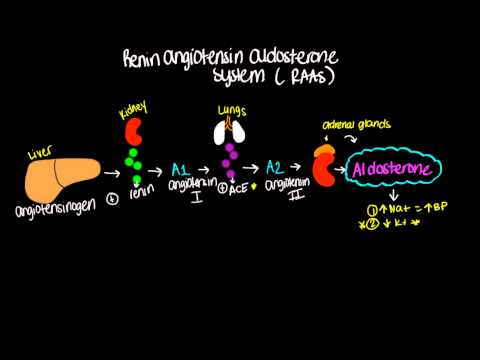 Renin Angiotensin Aldosterone System (RAAS) - Short and sweet!
