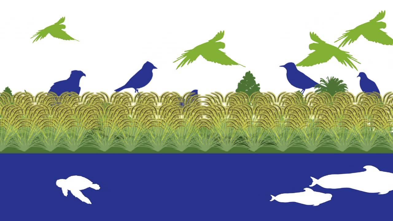 Biodiversidad canaria