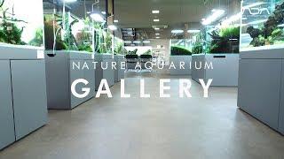 Galeria ADA