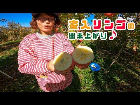 , title : '【りんご】今年も美味しい蜜入りリンゴができました♪