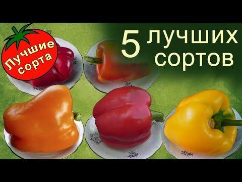 Лучшие Сорта Перца Сладкого