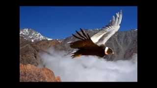 El cóndor pasa Savia Andina
