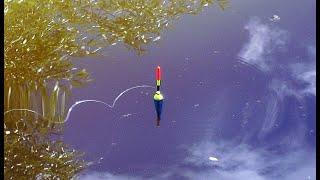 Рыбалка крупный карась и карп на поплавочную удочку 2020