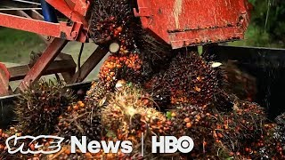 Norway Learned To Stop Eating The Rainforest (HBO)