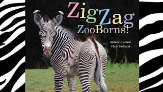 Book 12. ZigZag ZooBorns! Zoo Baby Colors & Patterns | Childrens Stories | Read Aloud | Story Time