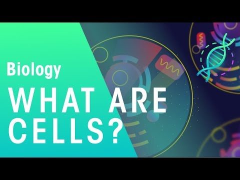 What are cells | Cells | Biology | FuseSchool