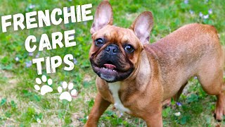 10 Tips | How To Take Care Of A FRENCH BULLDOG