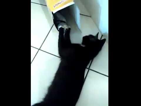 Katze holt sich Plüschtier aus Karton #17