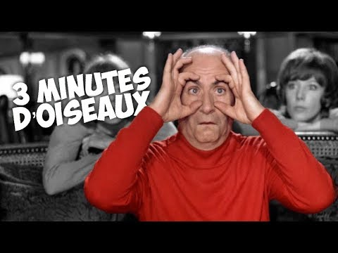 3 minutes d'oiseaux avec Louis de Funès !