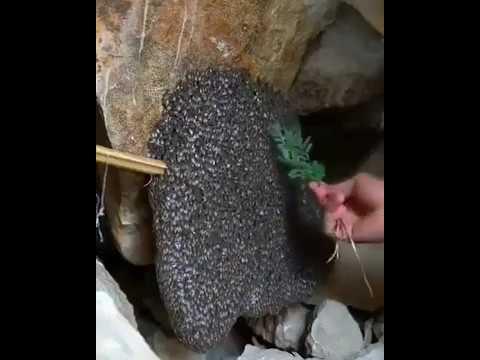 Пчеловодство. Вы не поверите!!!!Супер-эко новая технология пчеловождения без вложений !!!!