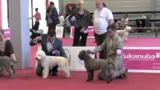 World Dog Show, Budapest 2013, part 2