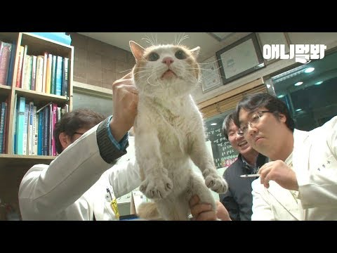 People in Korea save a cat that's been stuck in the walls of an apartment complex for two years