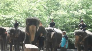 Persembahan Gajah Di Kuala Gandah