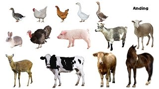 Farm Animals - Picture Play