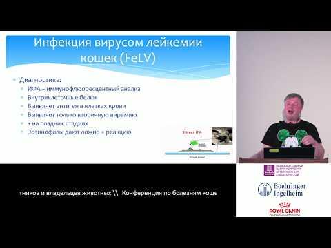 Пака М. В. - Вирус лейкоза кошек