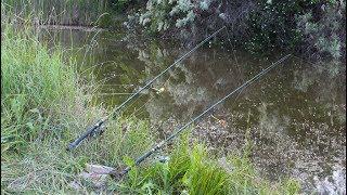 Рыбалка в беларуси на карпа