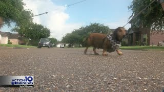 Dog suffers from severe burns due to hot pavement
