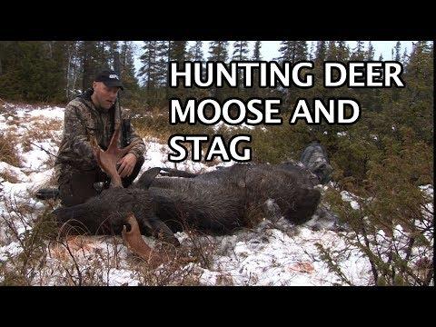 Srnec, los a jelen