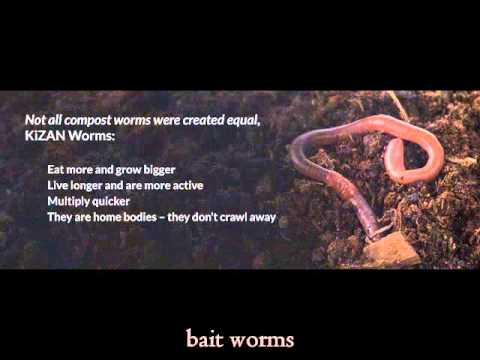 Worm sintomas sa isang bata 3